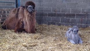 Doris gave birth on Thursday night