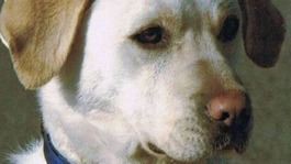 Army dog killed in Afghanistan given highest military honour
