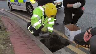 Firemen rescued 10 ducklings stuck in a drain in Peterborough.