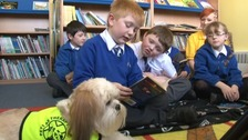 A Bark and Read session