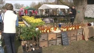 Thriplow Daffodil Festival