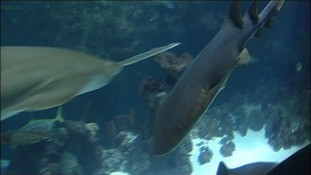 Shark week at Scarborough Sea Life Centre