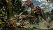 The Pinnocio rex belonged to the same family as Tyrannosaurus rex, according to scientists.