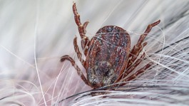 Increase in ticks in West Country