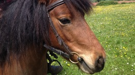 Car drives into ponies on country lane