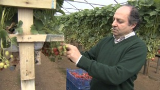 Riccardo Lavarini inspects the produce.
