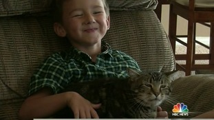 Owners of hero cat: 'The dog didn't know what hit it'
