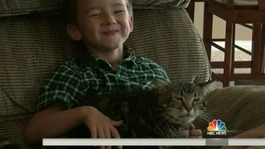 Hero cat saves boy from dog attack