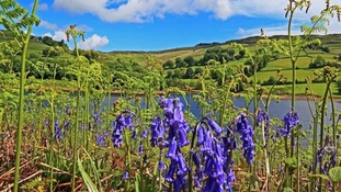 ferns, bluebells, blue skies and lake