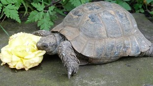 Humphrey the tortoise.