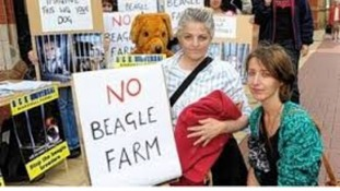 Opponents to the Grimston beagle farm