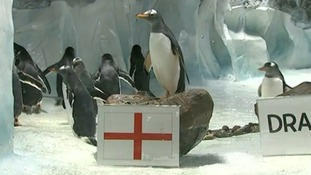 A penguin in Birmingham chooses England as the winner of this Saturday's game.