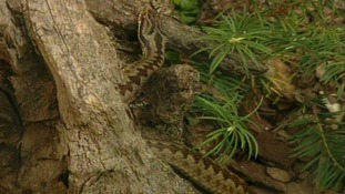 The incident is believed to have involved an adder.