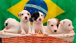 World Cup pups: Meet Ronaldog and pals