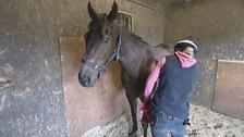 Horse, sprinter, Kent