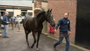 'Heroes Welcome' is unveiled at a Newmarket stables