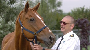 RSPCA confirms almost 600 convictions for cruelty or neglect of horses