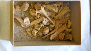 Seeds and animal bones were found inside the ancient royal tomb discovered at the University of Bristol.