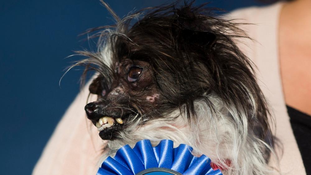 Meet Peanut, the world's 'ugliest' dog - ITV News