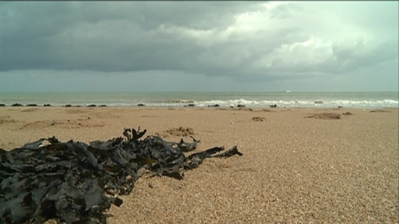 A Thanet beach with seaweed