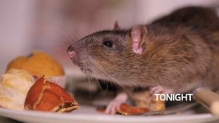 How do we tackle poison-resistant super rats?