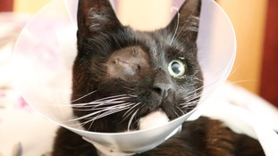 Cat loses his eye after being shot in the face