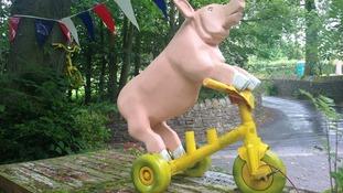 A pig on a bike...