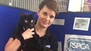 Cat from Leeds rescued in Euston