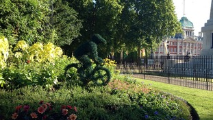 Tour de France topiary can be spotted in St James's Park as the capital excitedly prepares for the world's most famous cycle race.