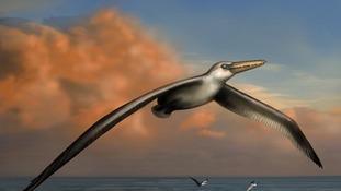 The Big Bird 'like something out of a fantasy novel'