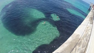 The huge school of anchovies seen off the coast of La Jolla, San Diego.