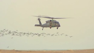 The helicopter was brought down by a flock of geese, the report said.