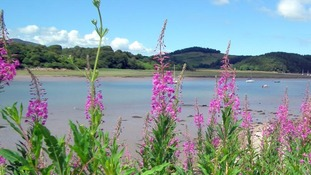 Tall purple flowers, lake, blue sky