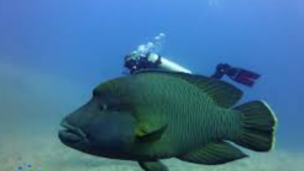 Fish called 39 bonaparte 39 to help save his species granada for Are fish considered animals