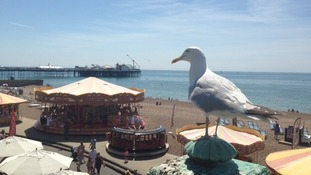 View of Brighton Beach with seagull
