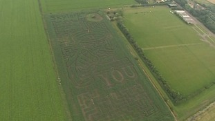 An amazing maize maze in the shape of Lord Kitchener.
