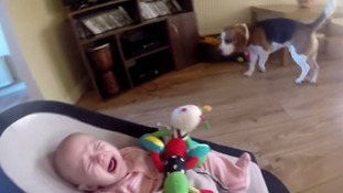 The adorable clip has been viewed over a million times.