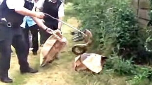 Police retrieve the snakes using a litter picker