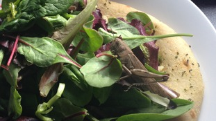 Locust in salad