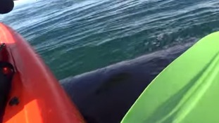 The moment a whale lifted the kayak into the air.