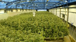 The official cannabis growing facility used by GWPharma