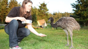 Bala Emu