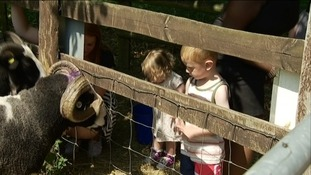 Families can enjoy hands on activities at the farm