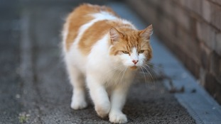 Rocky reportedly received the Asbo for fighting with other cats and refusing to leave neighbour's homes.