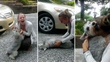 Dog faints with joy at seeing owner after two years away