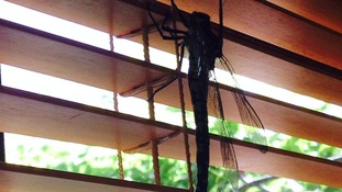 Rowena said the black-grey giant dragonfly was about 8 inches long.