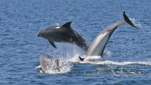 Whale and dolphin watch week in the West Country