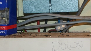 Mouse droppings on the fuse box