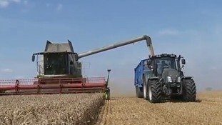 Wheat harvest comes early for bumper crop