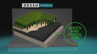 Desso roots and fibres
